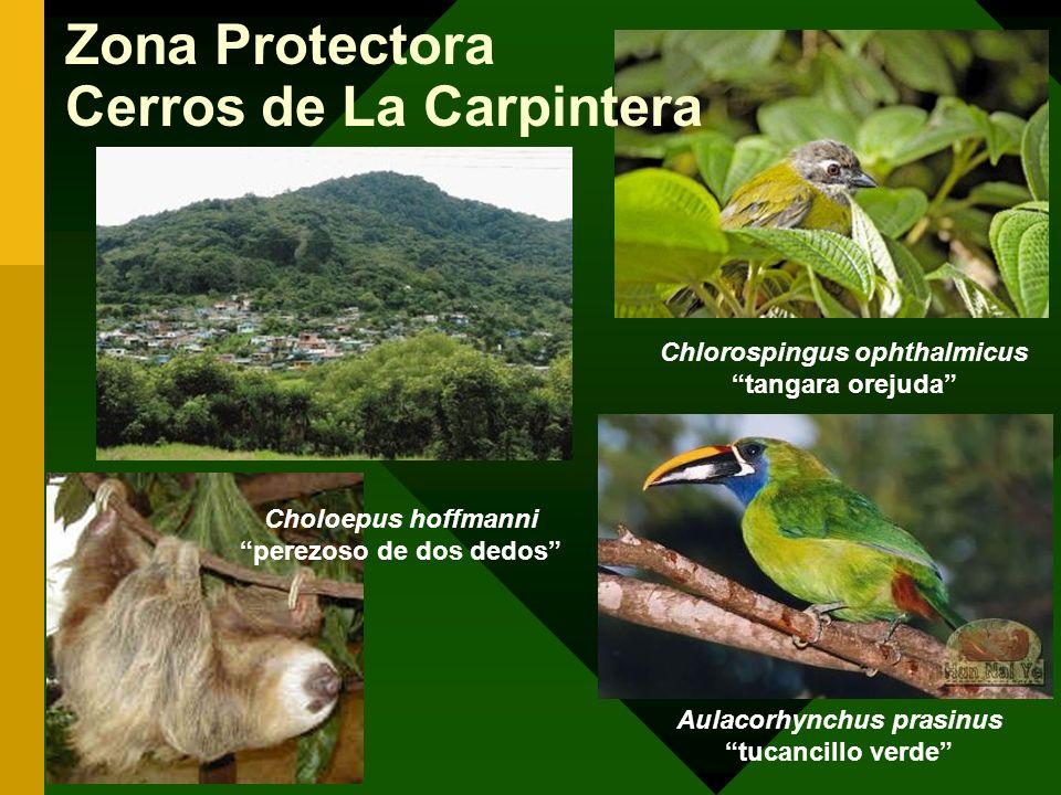 Zona Protectora Cerros de La Carpintera