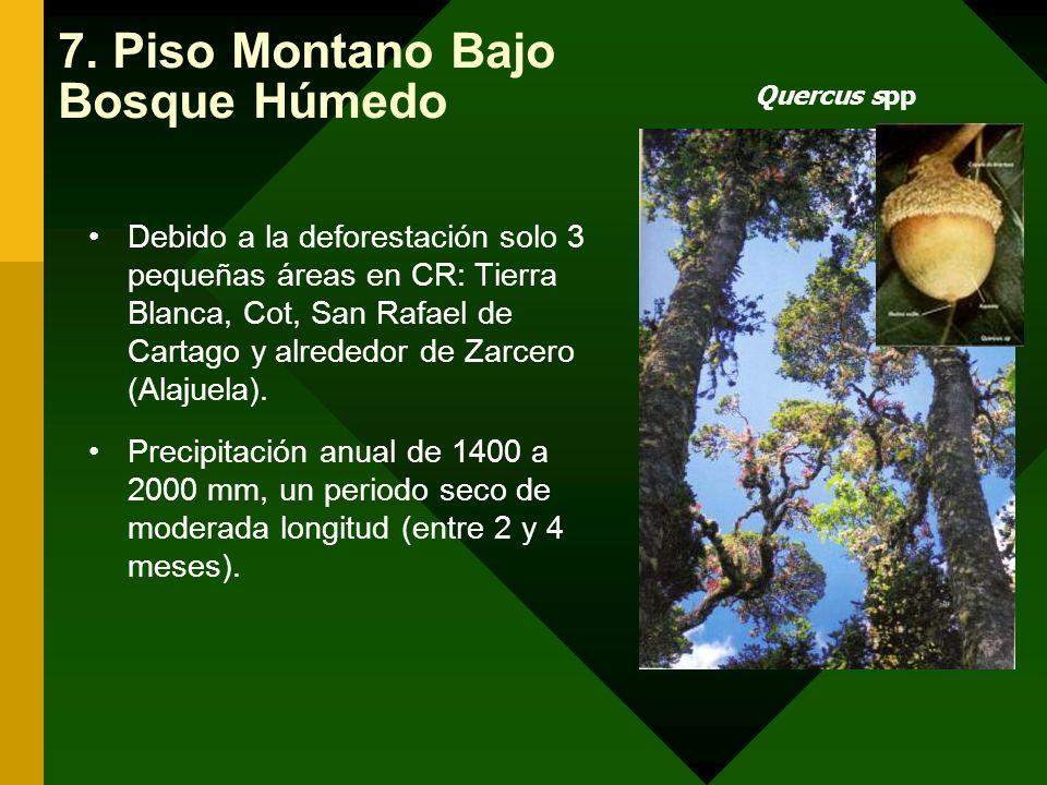 7. Piso Montano Bajo Bosque Húmedo