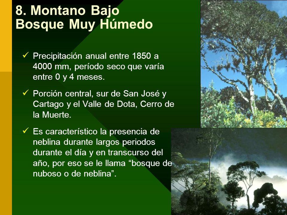 8. Montano Bajo Bosque Muy Húmedo