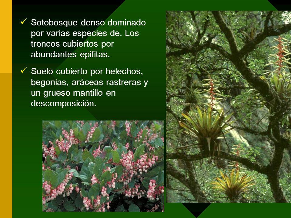 Sotobosque denso dominado por varias especies de