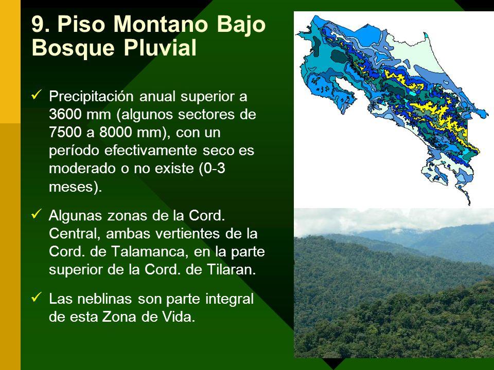 9. Piso Montano Bajo Bosque Pluvial
