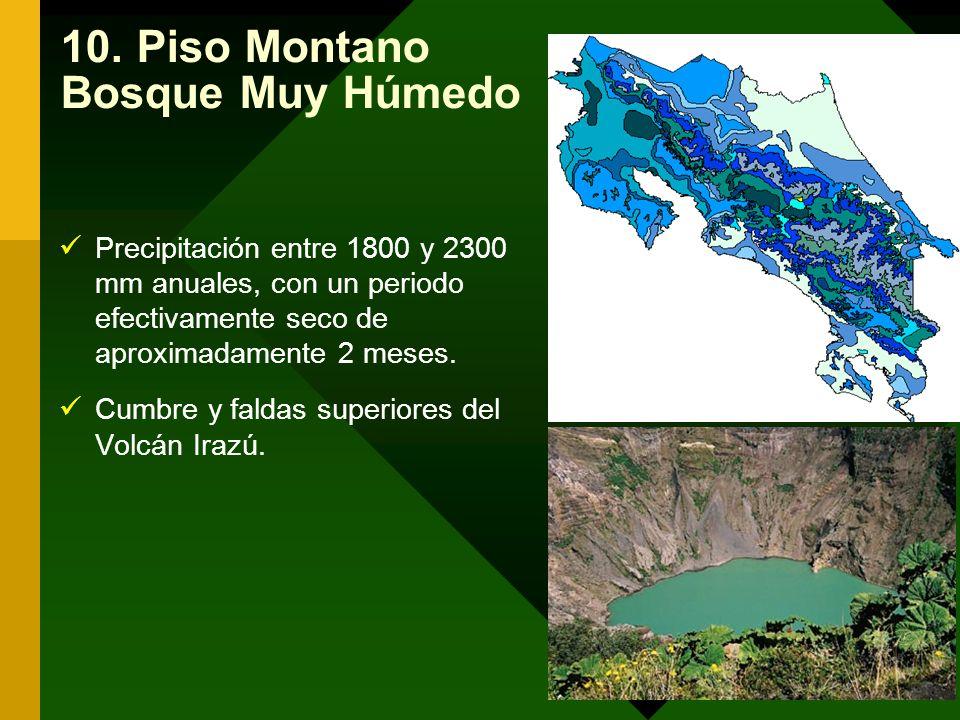10. Piso Montano Bosque Muy Húmedo