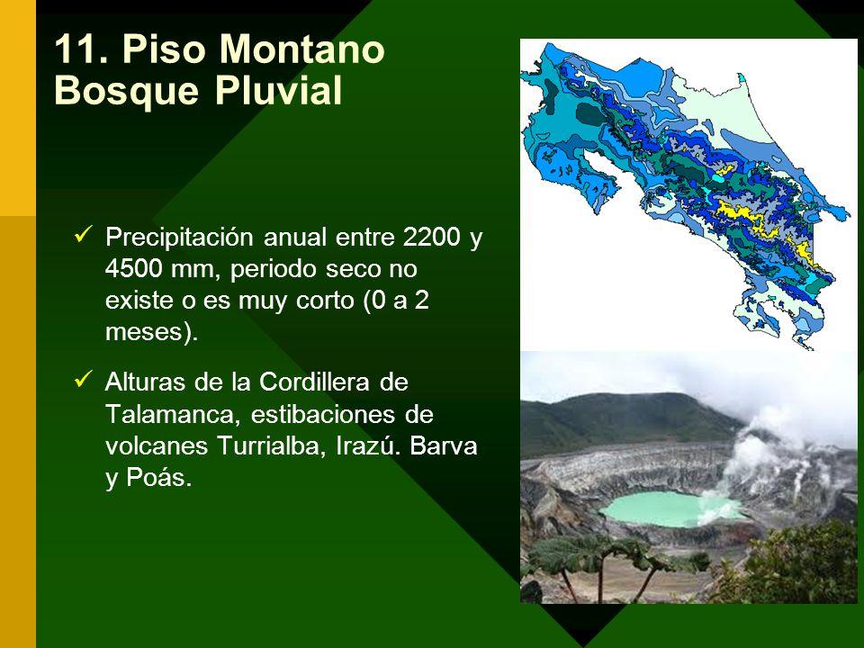 11. Piso Montano Bosque Pluvial