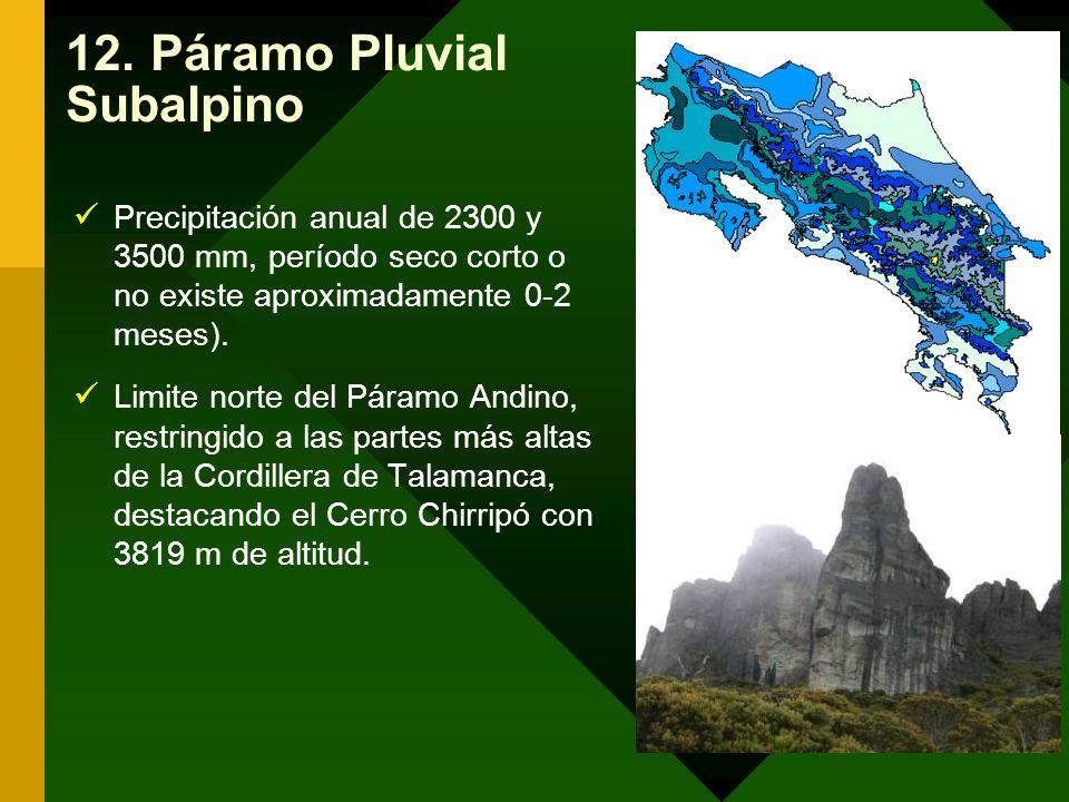 12. Páramo Pluvial Subalpino