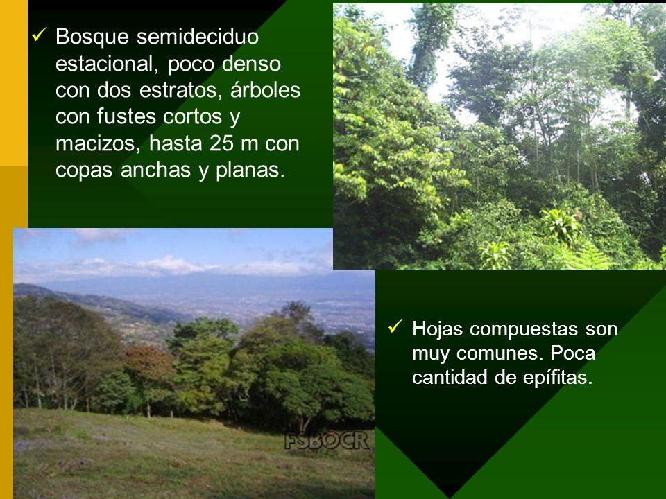 Bosque semideciduo estacional, poco denso con dos estratos, árboles con fustes cortos y macizos, hasta 25 m con copas anchas y planas.
