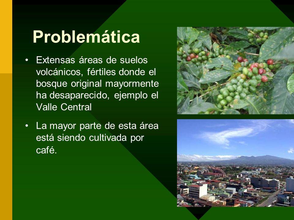 ProblemáticaExtensas áreas de suelos volcánicos, fértiles donde el bosque original mayormente ha desaparecido, ejemplo el Valle Central.
