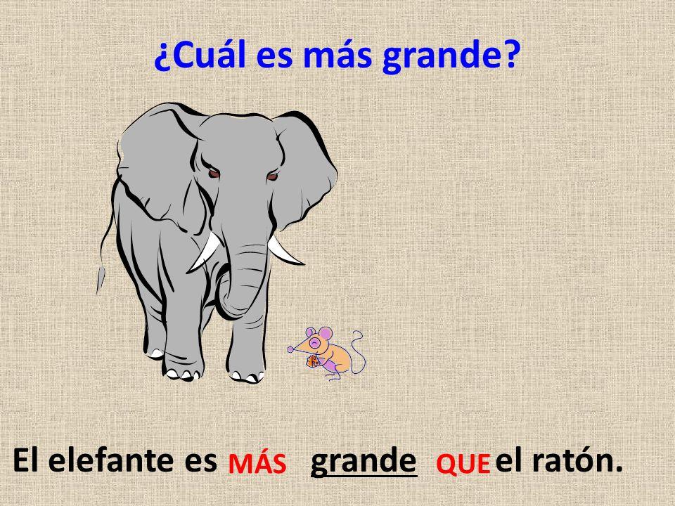 El elefante es grande el ratón.