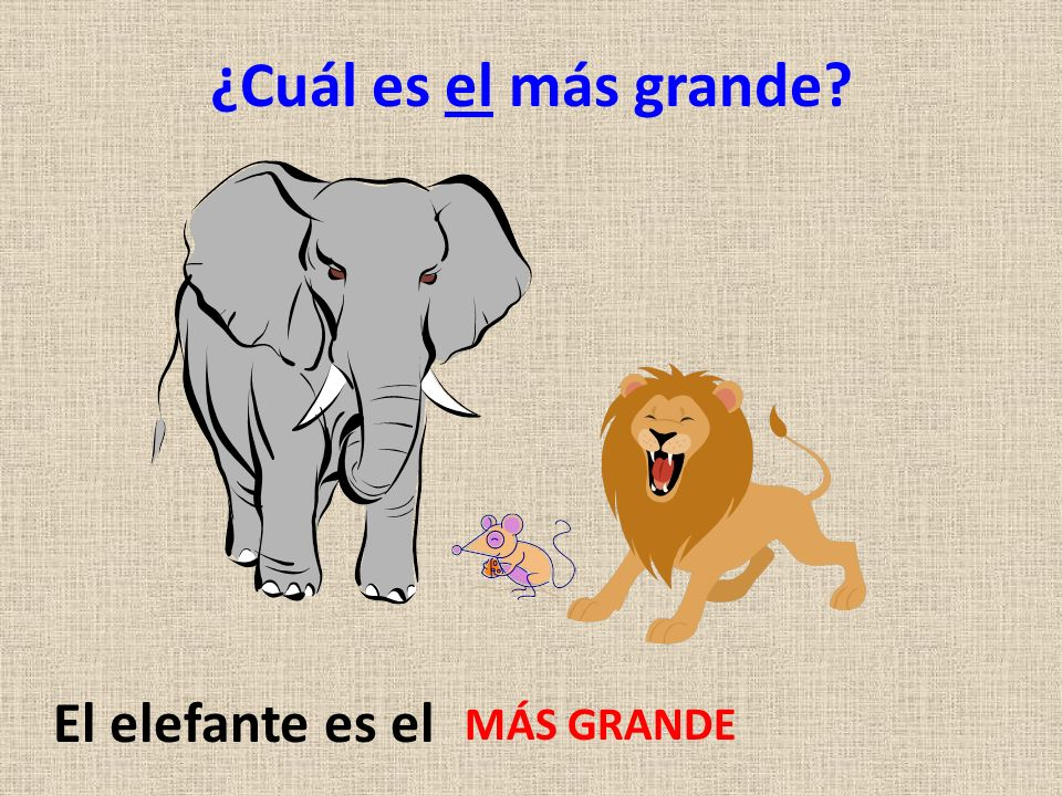 ¿Cuál es el más grande El elefante es el MÁS GRANDE