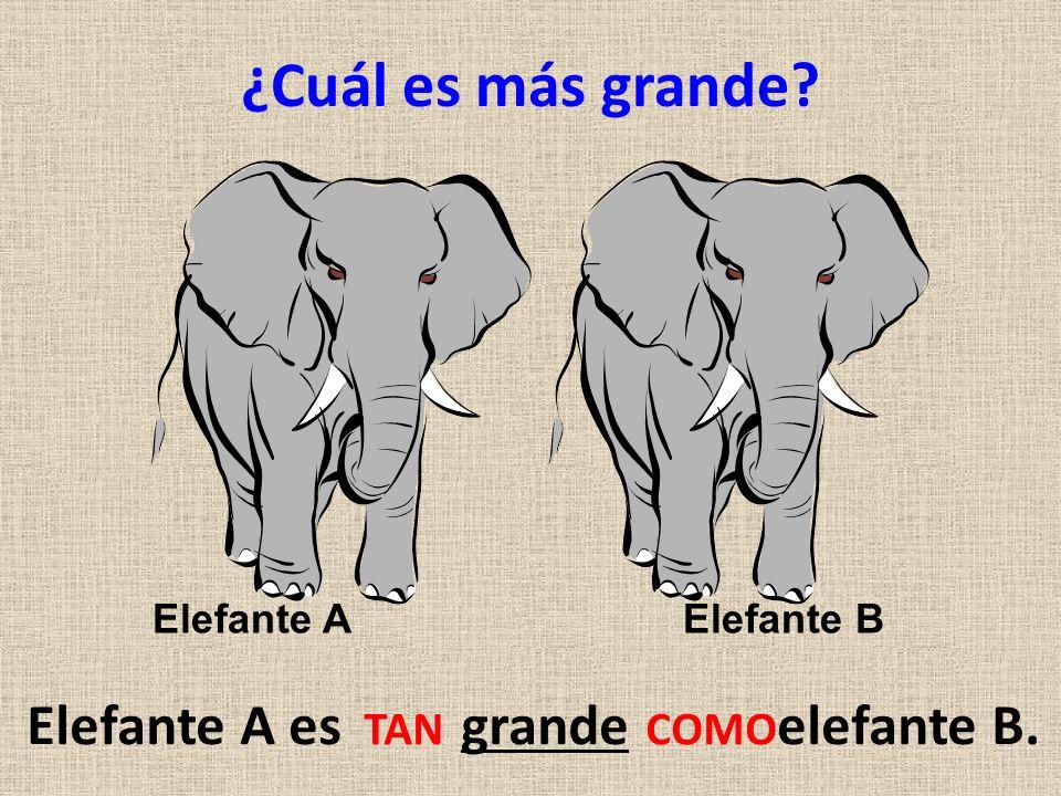 Elefante A es grande elefante B.