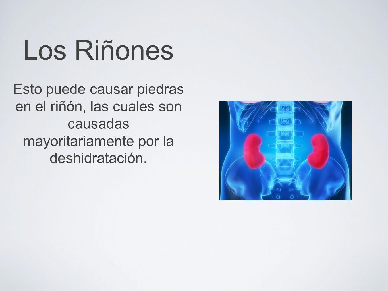 Los RiñonesEsto puede causar piedras en el riñón, las cuales son causadas mayoritariamente por la deshidratación.