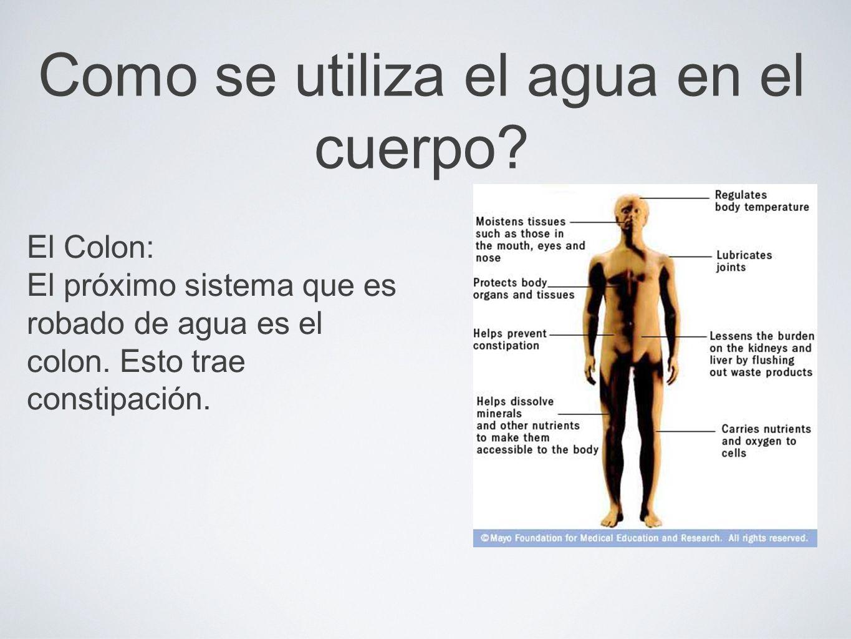 Como se utiliza el agua en el cuerpo