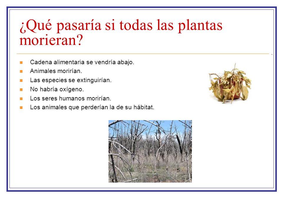 ¿Qué pasaría si todas las plantas morieran