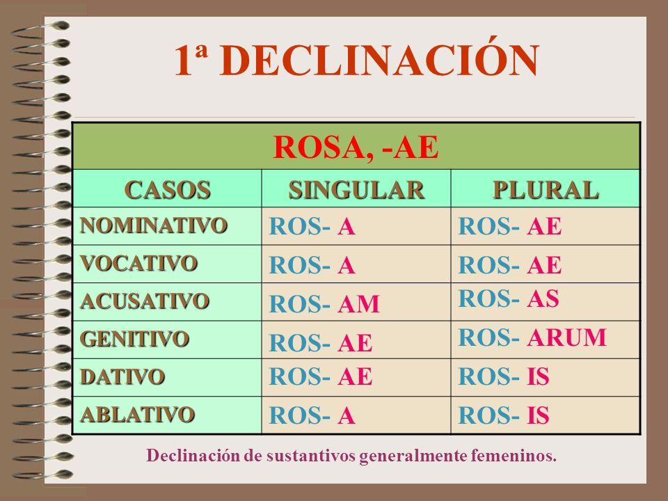1ª DECLINACIÓN ROSA, -AE CASOS SINGULAR PLURAL ROS- A ROS- AE ROS- A