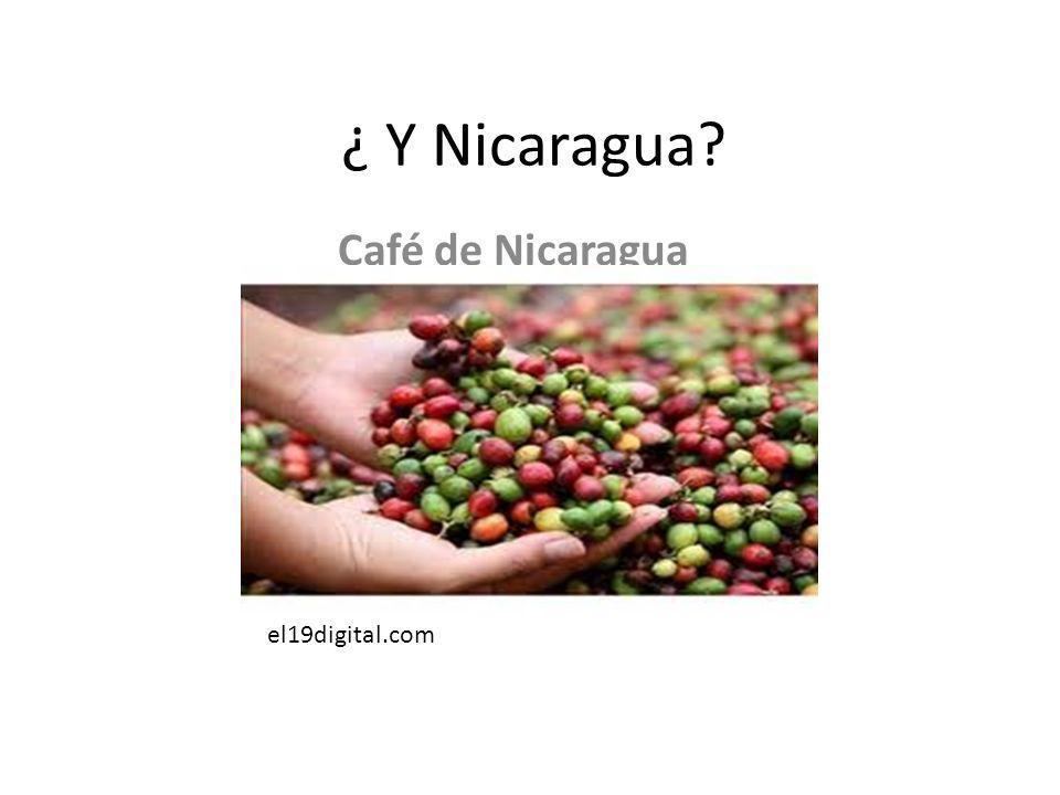 ¿ Y Nicaragua Café de Nicaragua el19digital.com