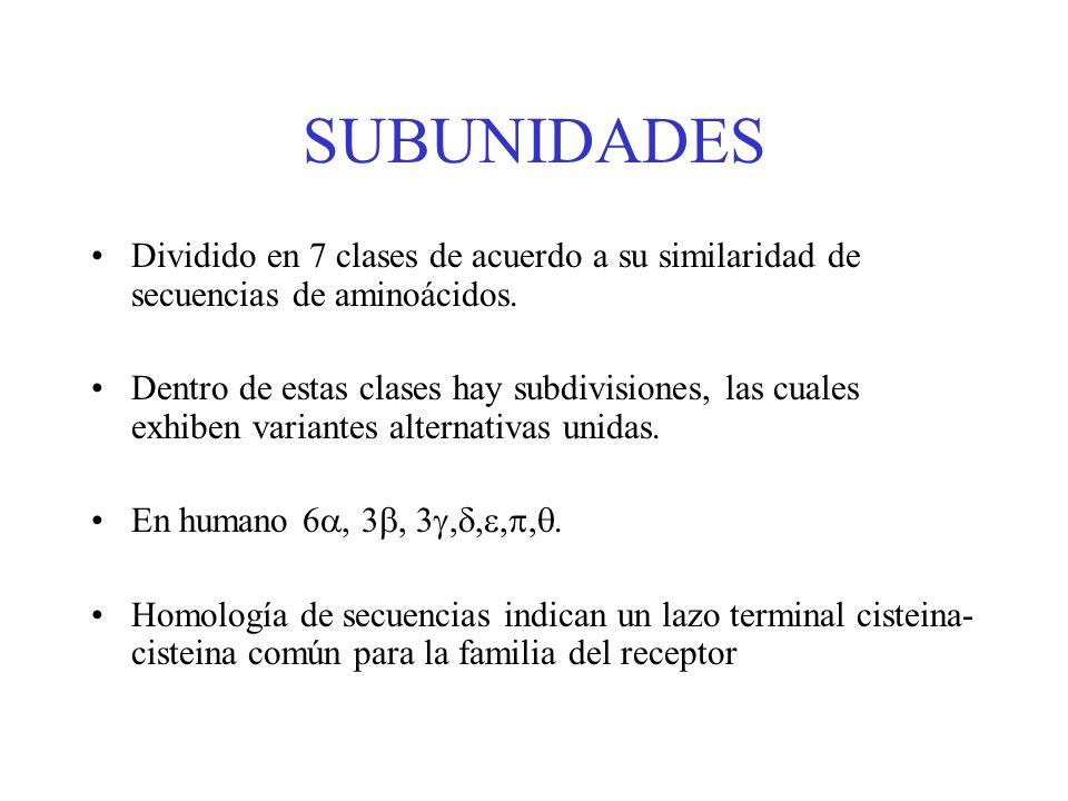 SUBUNIDADESDividido en 7 clases de acuerdo a su similaridad de secuencias de aminoácidos.