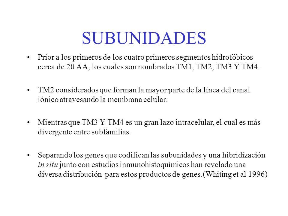 SUBUNIDADESPrior a los primeros de los cuatro primeros segmentos hidrofóbicos cerca de 20 AA, los cuales son nombrados TM1, TM2, TM3 Y TM4.