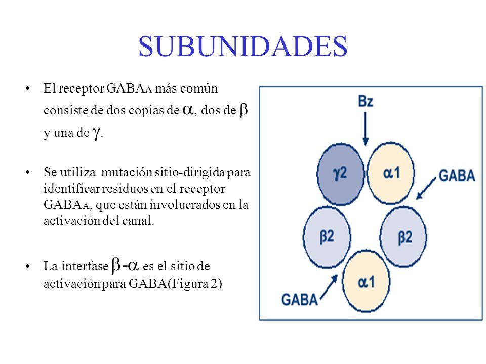 SUBUNIDADESEl receptor GABAA más común consiste de dos copias de , dos de  y una de .