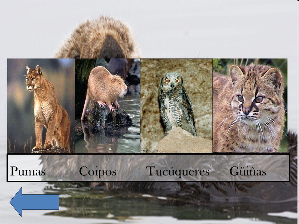 Pumas Coipos Tucúqueres Güiñas