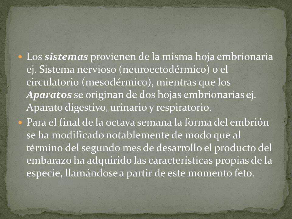 Los sistemas provienen de la misma hoja embrionaria ej