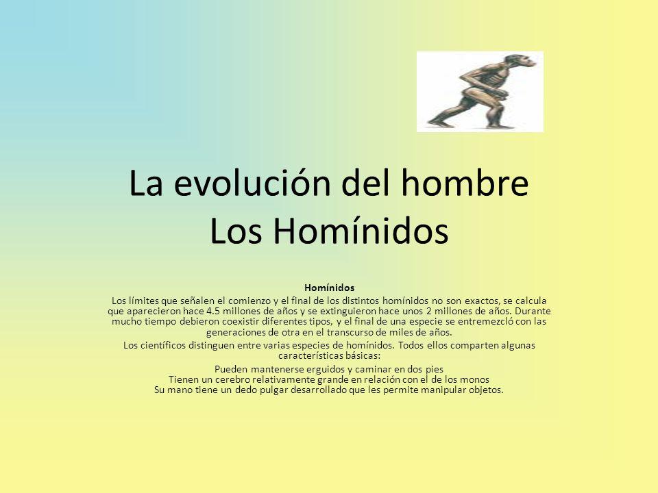 La evolución del hombre Los Homínidos