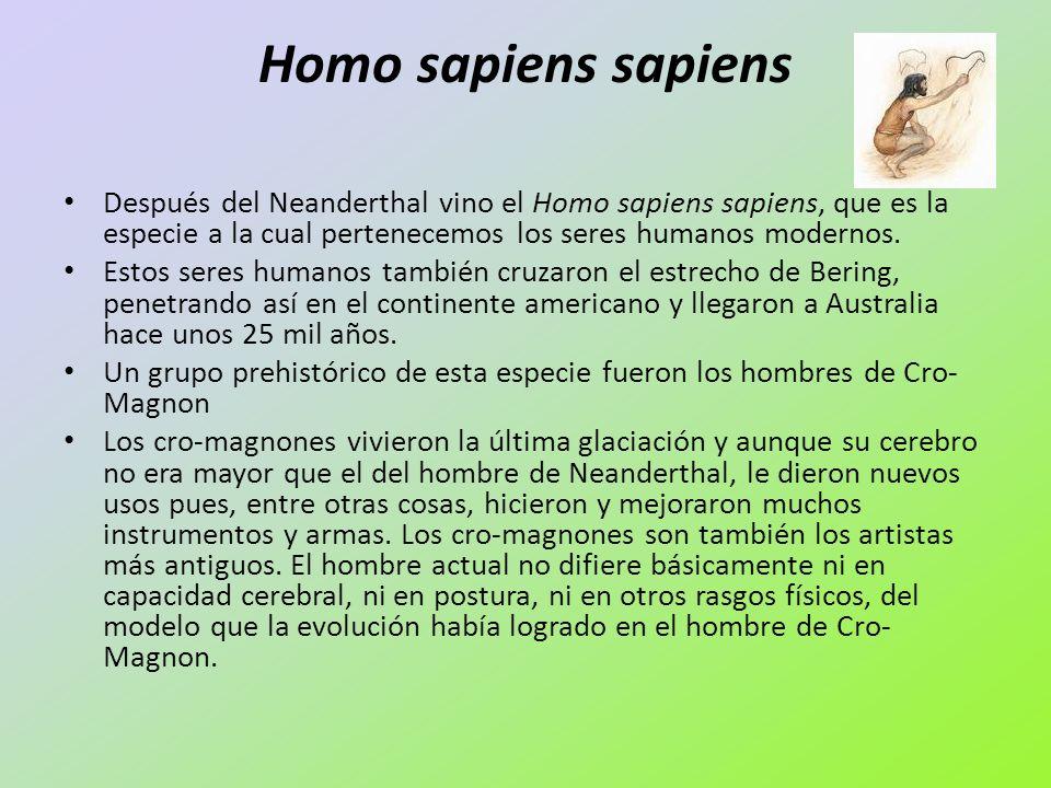 Homo sapiens sapiensDespués del Neanderthal vino el Homo sapiens sapiens, que es la especie a la cual pertenecemos los seres humanos modernos.