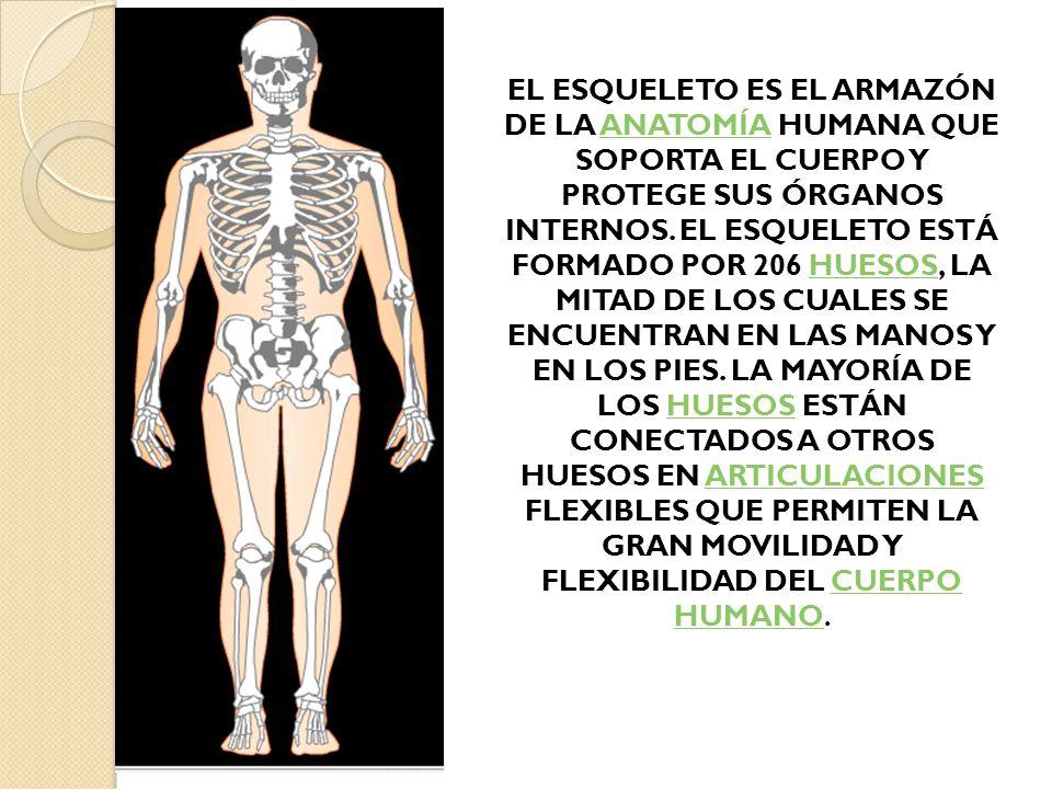 Contemporáneo Partes Del Cuerpo Humano Marcado Fotos - Anatomía de ...