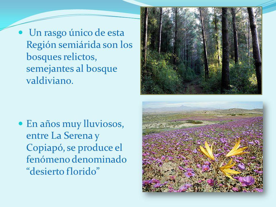 Un rasgo único de esta Región semiárida son los bosques relictos, semejantes al bosque valdiviano.
