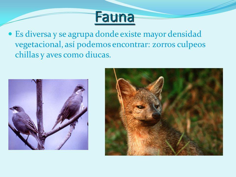 Fauna Es diversa y se agrupa donde existe mayor densidad vegetacional, así podemos encontrar: zorros culpeos chillas y aves como diucas.