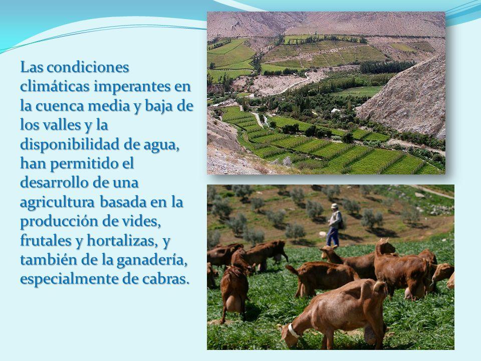 Las condiciones climáticas imperantes en la cuenca media y baja de los valles y la disponibilidad de agua, han permitido el desarrollo de una agricultura basada en la producción de vides, frutales y hortalizas, y también de la ganadería, especialmente de cabras.