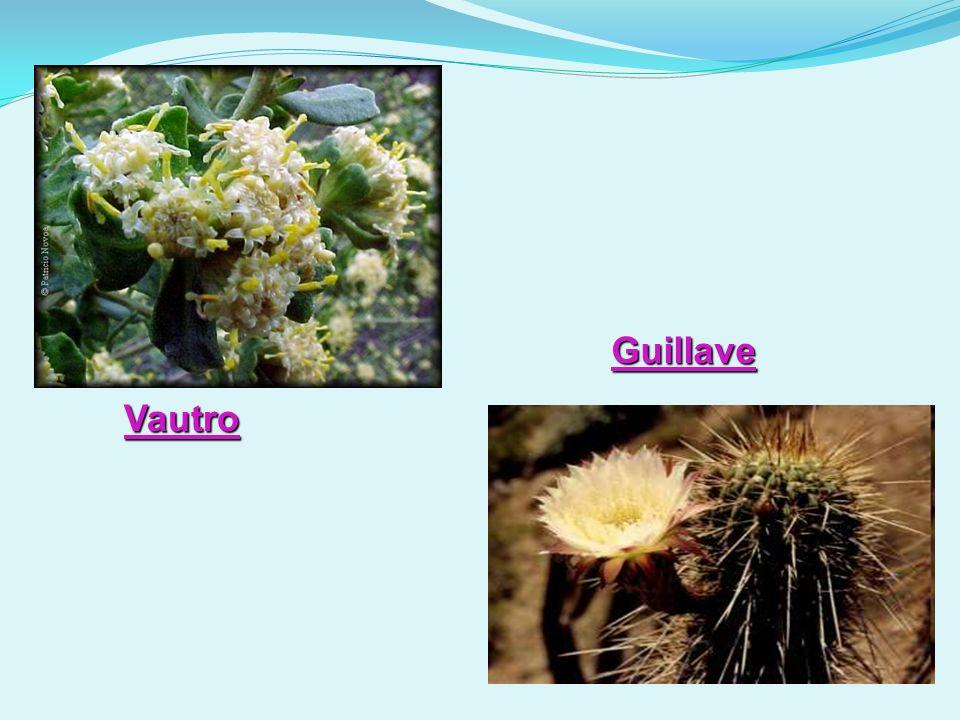 Guillave Vautro