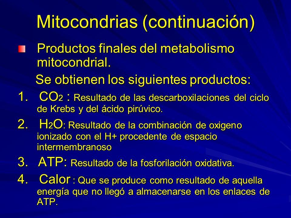 Mitocondrias (continuación)