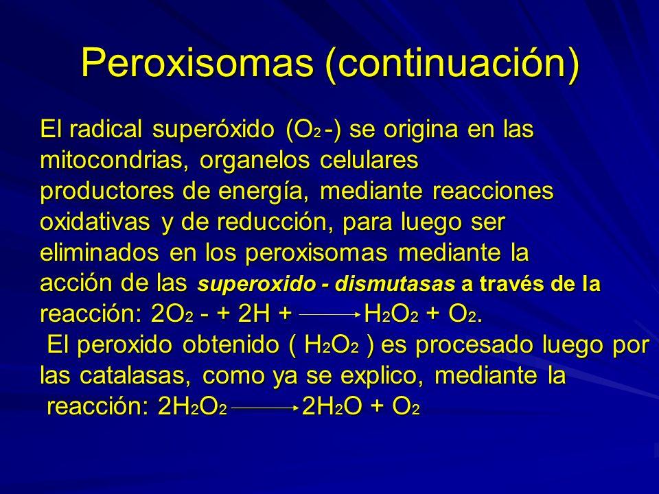 Peroxisomas (continuación)