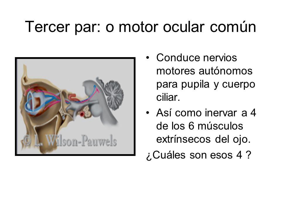 Tercer par: o motor ocular común