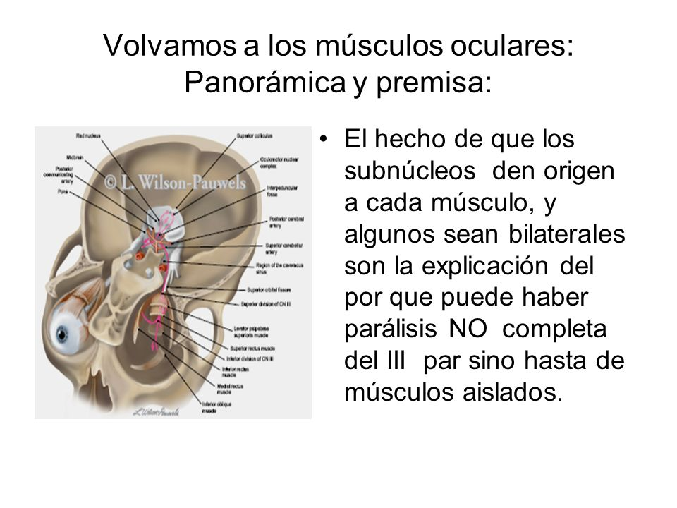 Volvamos a los músculos oculares: Panorámica y premisa: