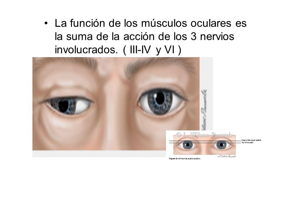 La función de los músculos oculares es la suma de la acción de los 3 nervios involucrados.