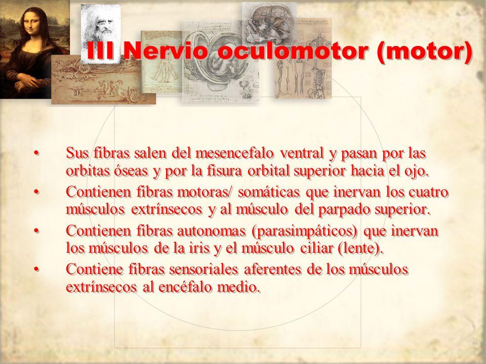 III Nervio oculomotor (motor)