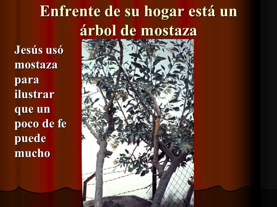 Enfrente de su hogar está un árbol de mostaza