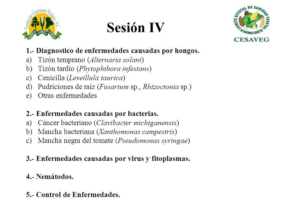 Sesión IV 1.- Diagnostico de enfermedades causadas por hongos.