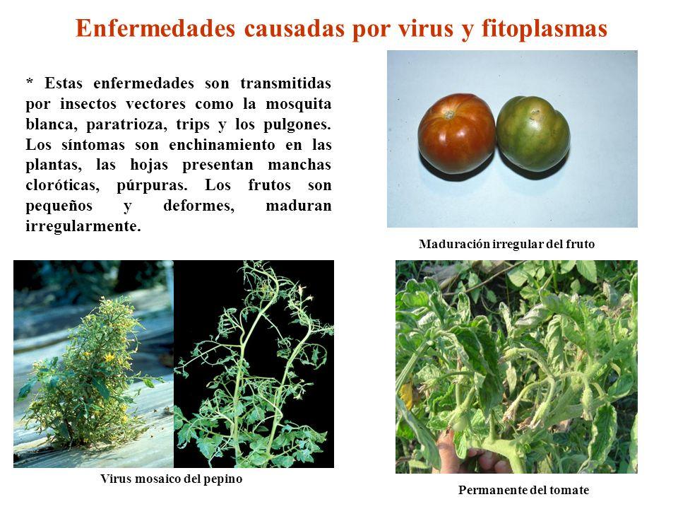 Enfermedades causadas por virus y fitoplasmas