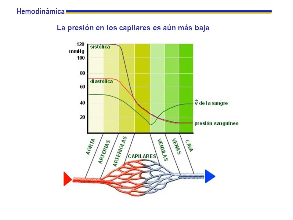 Hemodinámica La presión en los capilares es aún más baja