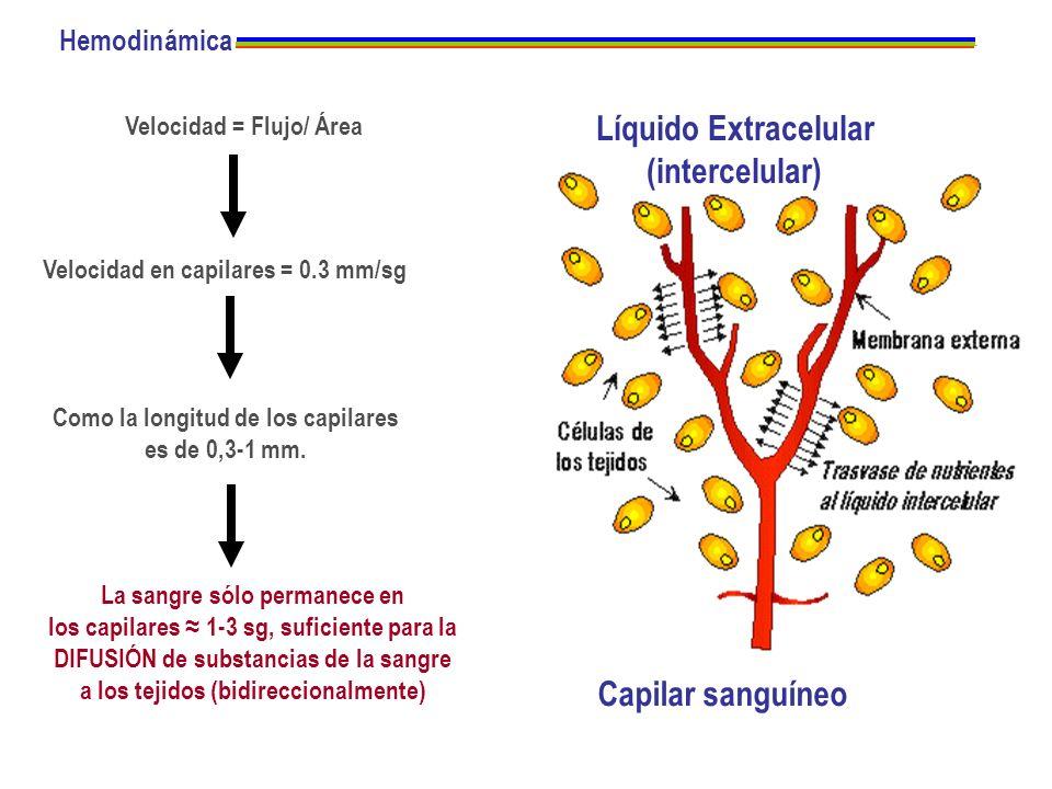 Líquido Extracelular (intercelular)
