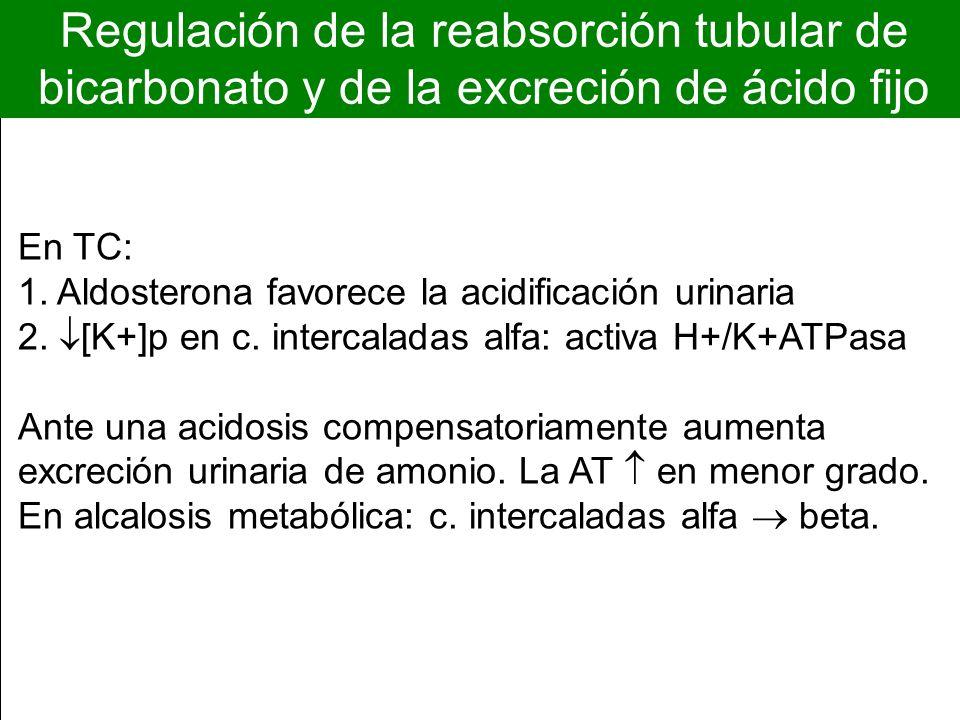 Regulación de la reabsorción tubular de bicarbonato y de la excreción de ácido fijo