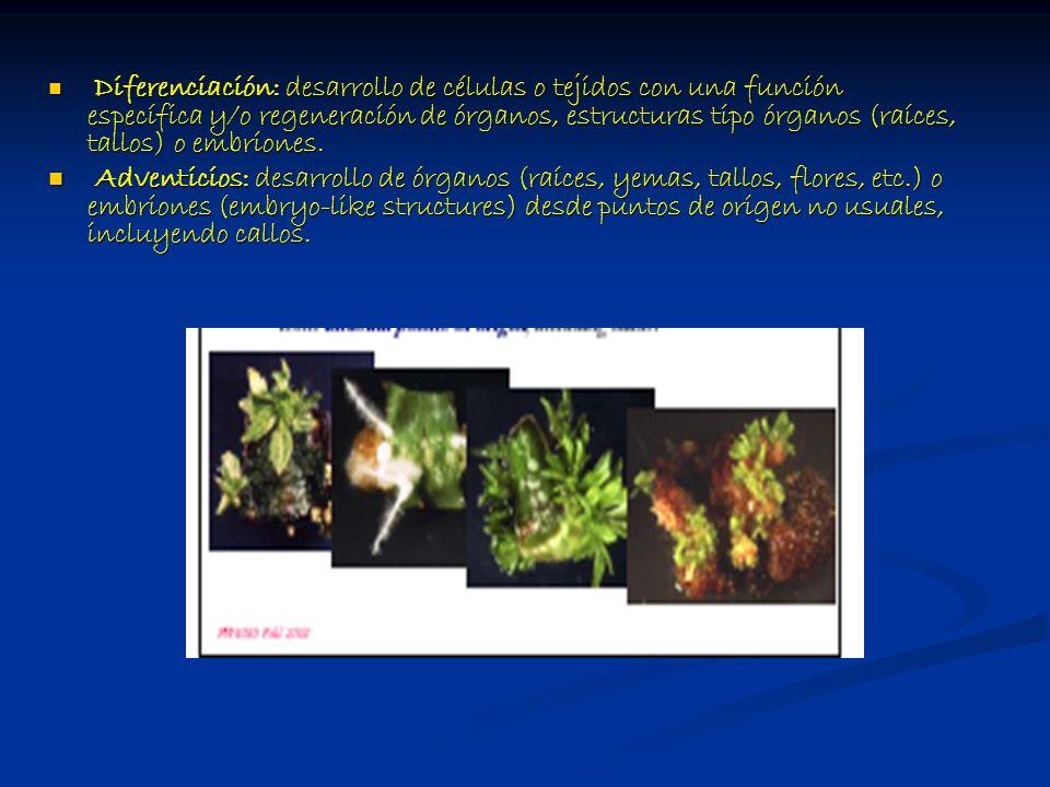 Diferenciación: desarrollo de células o tejidos con una función específica y/o regeneración de órganos, estructuras tipo órganos (raíces, tallos) o embriones.