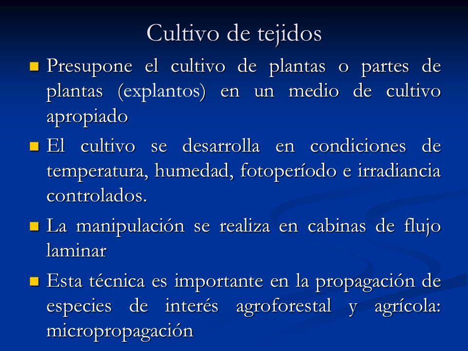 Cultivo de tejidos Presupone el cultivo de plantas o partes de plantas (explantos) en un medio de cultivo apropiado.