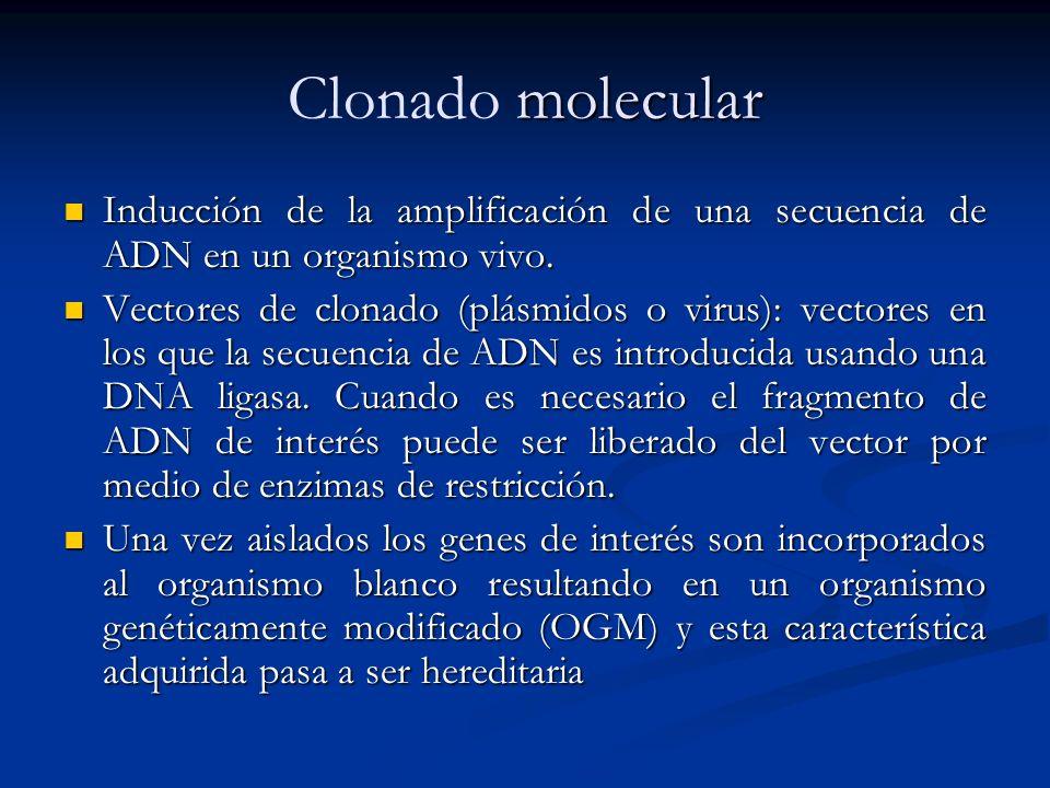 Clonado molecular Inducción de la amplificación de una secuencia de ADN en un organismo vivo.