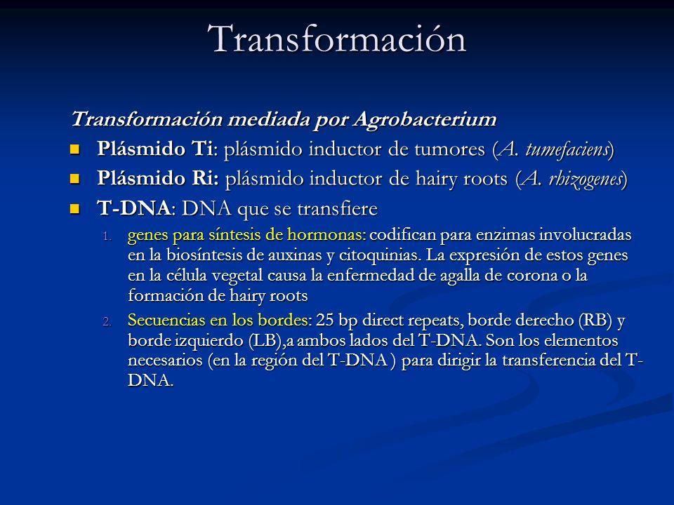 Transformación Transformación mediada por Agrobacterium