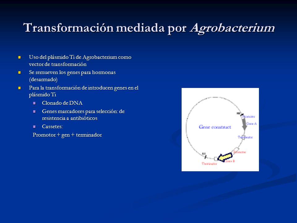 Transformación mediada por Agrobacterium
