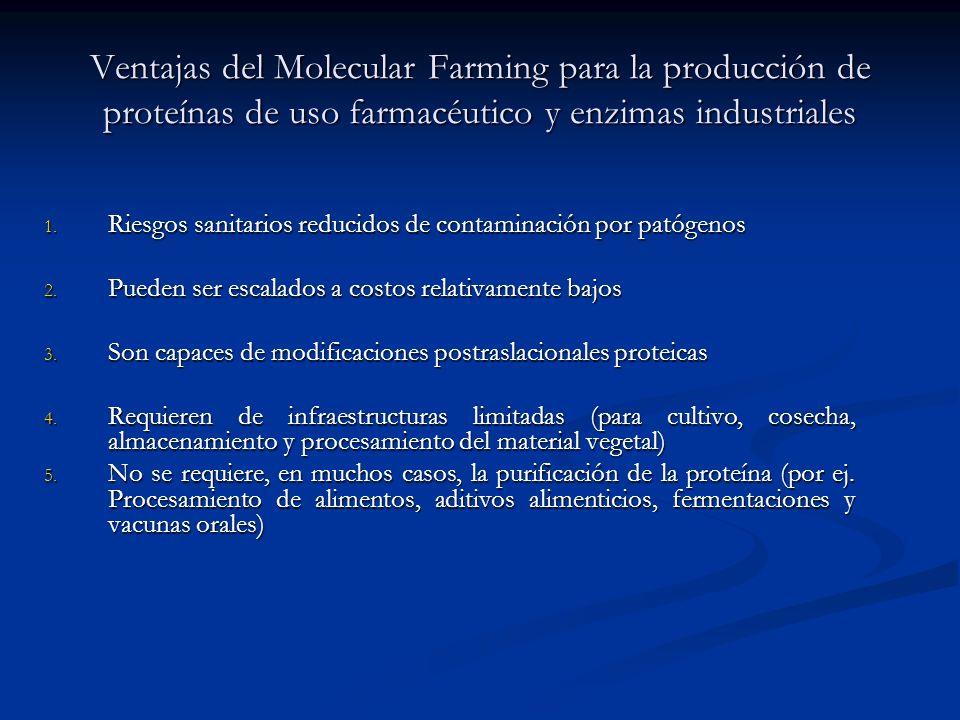 Ventajas del Molecular Farming para la producción de proteínas de uso farmacéutico y enzimas industriales