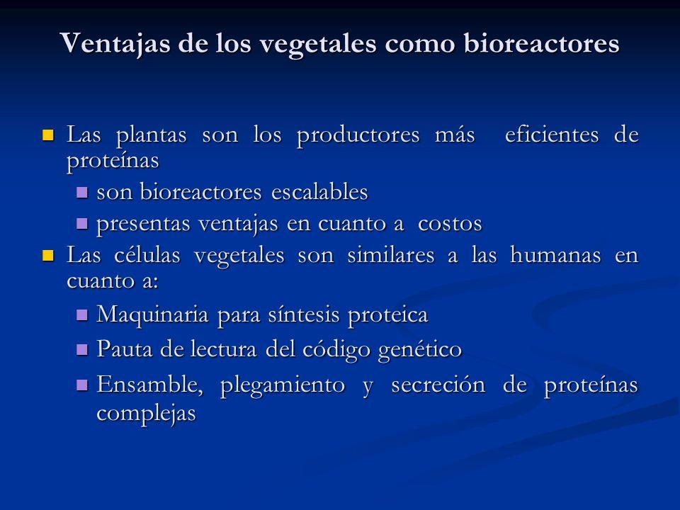 Ventajas de los vegetales como bioreactores
