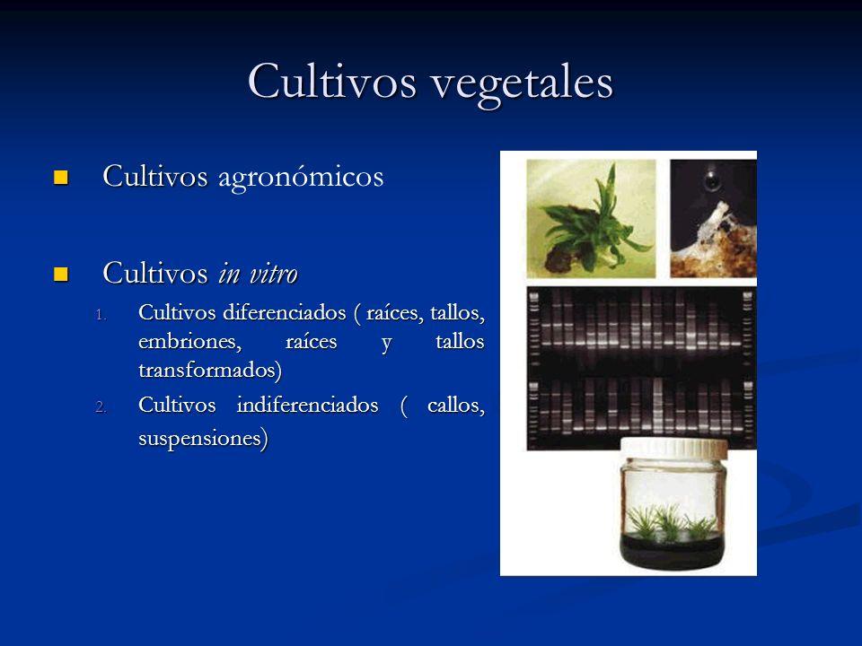 Cultivos vegetales Cultivos agronómicos Cultivos in vitro